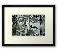 Settling in for the Cold Night Ahead Framed Print