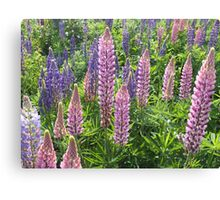 I'm Loopy For Lupins. Canvas Print
