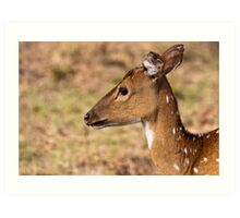 Chital Doe Portrait Art Print