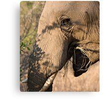 Elephant Brunch Canvas Print