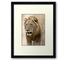 Male Lion Framed Print