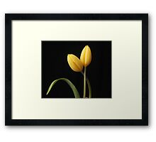 Yellow tulips with leaf Framed Print
