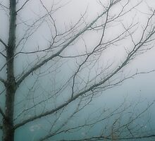 Veins In Misty Blue by A Different Eye Photography