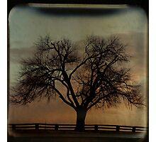 Fenceline TTV Photographic Print