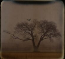 Foggy Morning TTV by Tia Allor