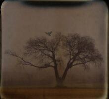Foggy Morning TTV by Tia Allor-Bailey