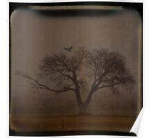 Foggy Morning TTV Poster