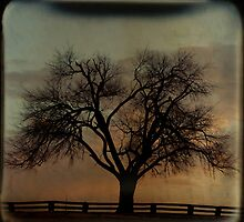 Fenceline TTV by Tia Allor (formerly Bailey)