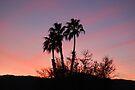 Desert Sunset by skreklow