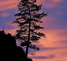 sunset bonzia tree by Rodney55