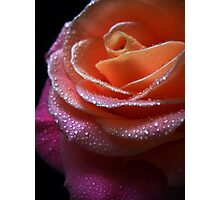 Gentle Rose. Photographic Print
