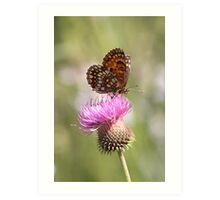 False Heath Fritillary butterfly Art Print