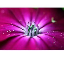 Pink Princess Photographic Print