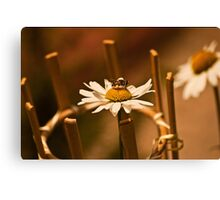 Calm Bee Canvas Print