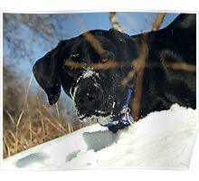 Maggie the Snowplow Poster