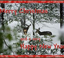 Holiday Wishes to Everyone by Vicki Pelham