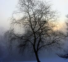 A misty Christmas morn by Debbie Ashe