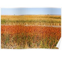 Colourful Grasses Poster