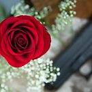 Touch The Rose by doorfrontphotos