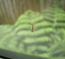 Baby Mantis by Luchare