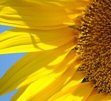 Sunny Flower by Bas Van Uyen