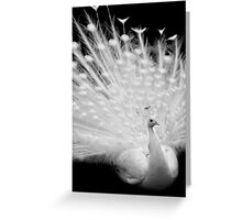 White peacock posing Greeting Card