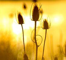 sunrise dance... by Allan  Erickson