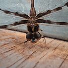 Dragonfly in Garage by frenzix