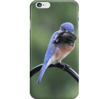 Shy Bluebird iPhone Case/Skin
