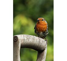 Robin on an old wooden garden fork handle. Photographic Print