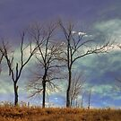 Hilltop Trees_1 by sundawg7