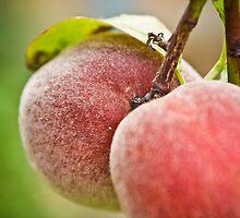 Fruity by Kelly McGill