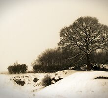 Winter 10 by Bernard Cavanagh