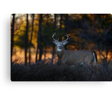 A big 7 pointer - White-tailed Deer Canvas Print