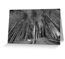 Thousand Trees Greeting Card