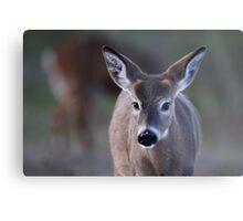 Pretty doe - White-tailed Deer Metal Print
