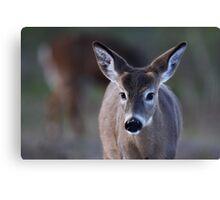 Pretty doe - White-tailed Deer Canvas Print