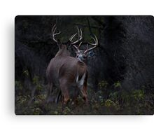 The Confrontation - White-tailed Deer Canvas Print
