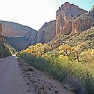 The Apache Trail  by Judy Grant