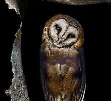 Shy owl  by Aleksandra Misic