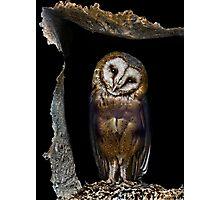 Shy owl  Photographic Print