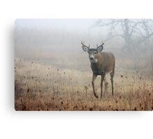 Coming through the fog - White-tailed Deer Canvas Print