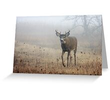 Coming through the fog - White-tailed Deer Greeting Card