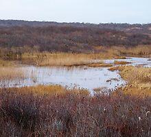 Oyster Pond by Dandelion Dilluvio