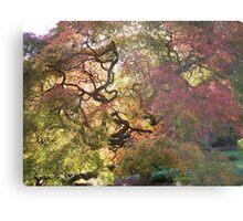 Tree  /  Holmdel Aboretum  Metal Print