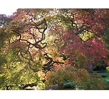 Tree  /  Holmdel Aboretum  Photographic Print