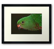Mother Nature's Finest Work - The Female King Parrot Framed Print