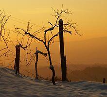 Winter Wine by Sturmlechner