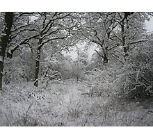 Snow in Epping Forest, Essex Photographic Print