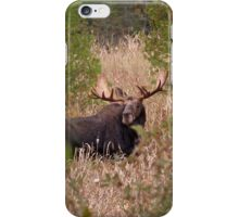 Moose in Rut - Algonquin Park, Canada iPhone Case/Skin